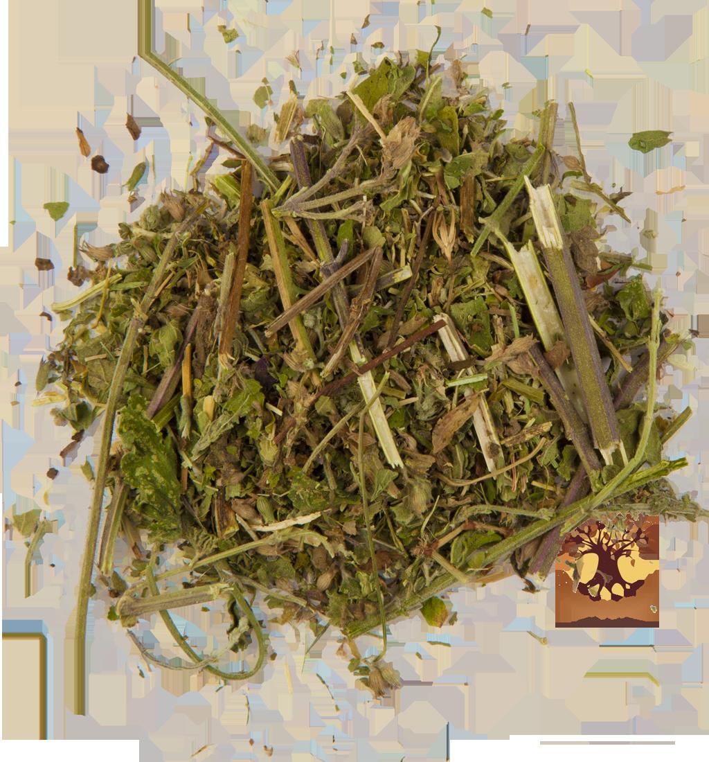 мелисса  трава